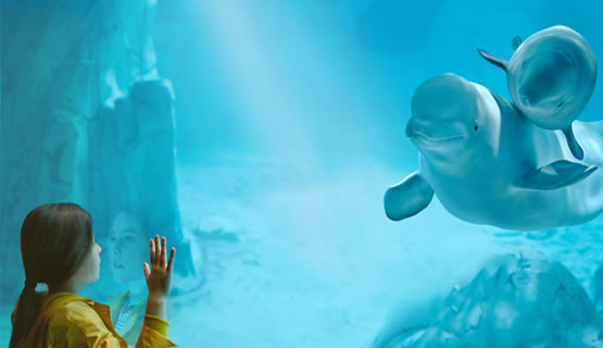 Entradas a oceanogr fic for Aquarium valencia precio