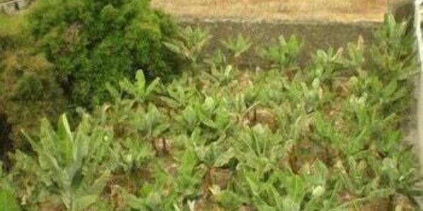 2326 hoteles en tenerife ofertas de hotel desde 12 - Hoteles baratos puerto de la cruz ...